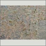 Bild 35 zum Bildarchiv Libellen