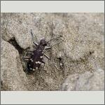 Bild 20 zum Bildarchiv Käfer