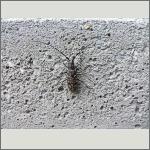 Bild 18 zum Bildarchiv Käfer