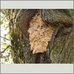 Bild 91 zum Bildarchiv Sonstige Insekten