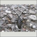 Bild 25 zum Bildarchiv Käfer