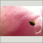 Bild 15 zum Bildarchiv Käfer