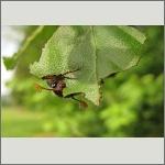 Bild 13 zum Bildarchiv Käfer