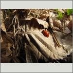 Bild 16 zum Bildarchiv Käfer