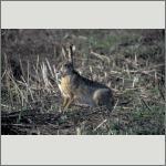 Bild 58 zum Bildarchiv Säugetiere