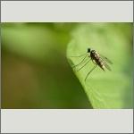 Bild 62 zum Bildarchiv Sonstige Insekten