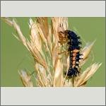 Bild 11 zum Bildarchiv Käfer