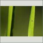 Bild 66 zum Bildarchiv Sonstige Insekten
