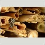 Bild 52 zum Bildarchiv Sonstige Insekten