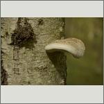 Bild 1 zum Bildarchiv Pilze