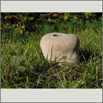 Bild 41 zum Bildarchiv Pilze