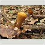 Bild 42 zum Bildarchiv Pilze