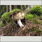Bild 28 zum Bildarchiv Pilze