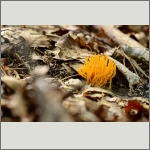 Bild 17 zum Bildarchiv Pilze