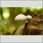 Bild 15 zum Bildarchiv Pilze