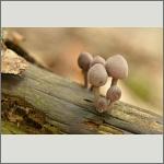 Bild 9 zum Bildarchiv Pilze