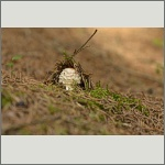 Bild 11 zum Bildarchiv Pilze