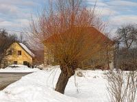Bild Dotterweide - Blickfang im Winter