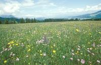 Bild Natura 2000- und Europaschutzgebiet Fronwiesen