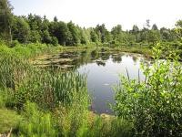 Bild Neu angelegte Wasserfläche auf dem ehemaligen Campingplatzareal