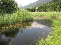 Bild 10 Jahre alter Teich