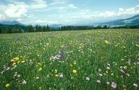 Bild Blick über die Fronwiesen