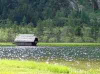 Bild Naturdenkmal Stappitzer See  (Mallnitz, Seebachtal)