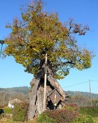 Bild Naturdenkmal Sommer-Linde in Pritschitz, Napoleonlinde (Pörtschach/See, Pritschitz)
