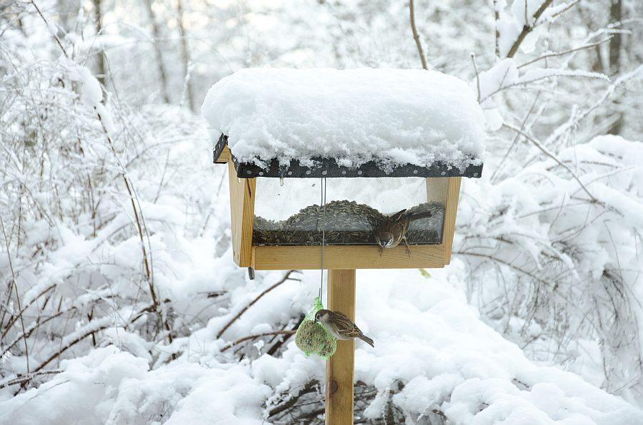weblog vogelf tterung im winter arge naturschutz. Black Bedroom Furniture Sets. Home Design Ideas