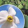 Bild zum Weblog-Eintrag 31
